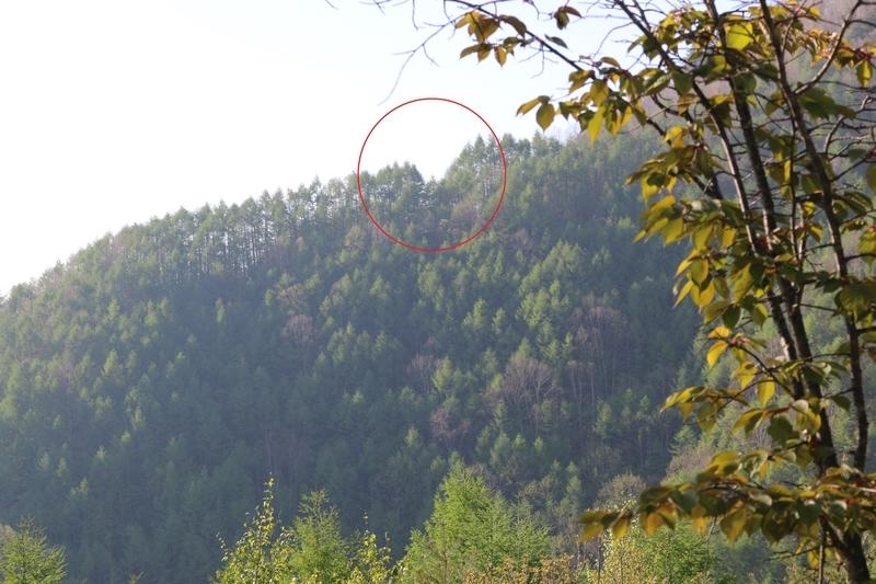 日航123便が墜落直前に機体を接触したV字跡