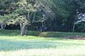 野生のニホンカモシカ(天然記念物)※岩手県遠野市・鍋倉城本丸跡