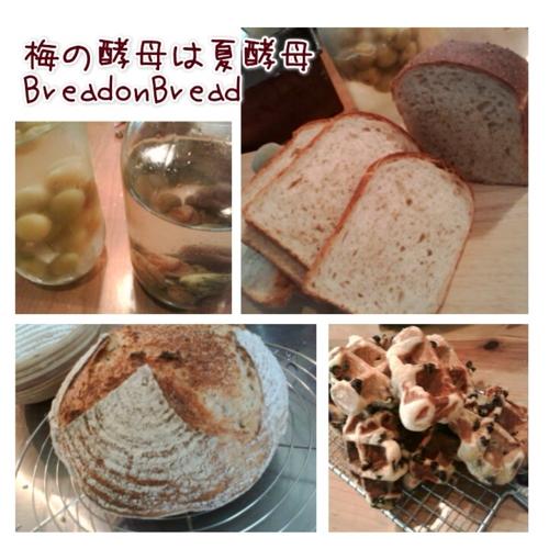 f:id:breadonbread:20160705095107j:image:w400:left