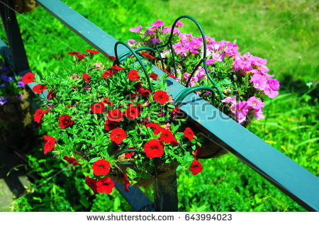 stock-photo-they-are-red-and-pink-flowers-in-the-garden-643994023.jpg