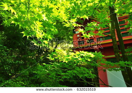 stock-photo-this-is-autumn-leaves-in-the-japanese-garden-632015519.jpg