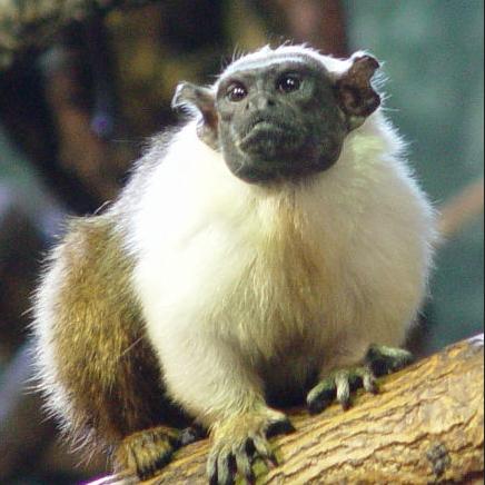 f:id:browncapuchin:20160616122402p:plain