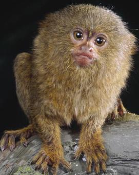 f:id:browncapuchin:20160616123332p:plain