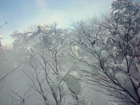 枝からザッと落ちる雪