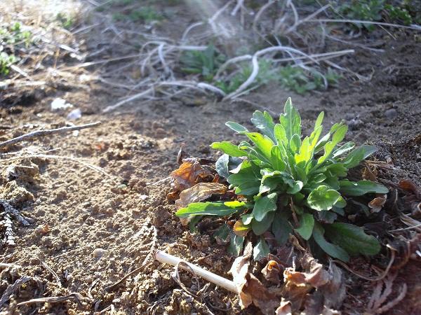 春の光と植物