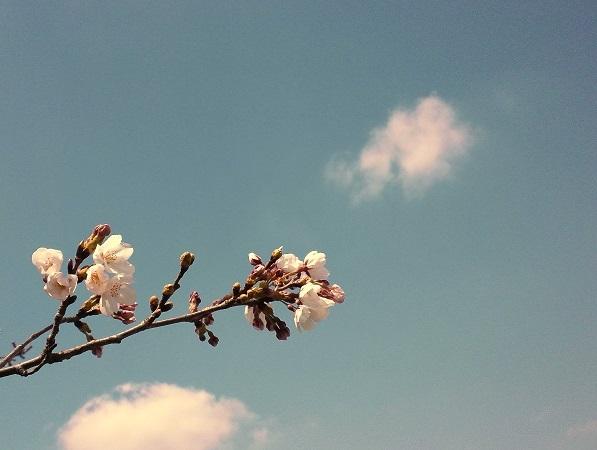 桜と春色の雲