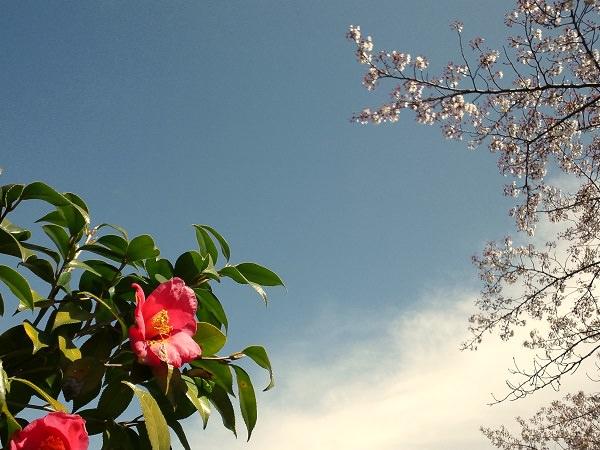 アセンテック当選に驚く春