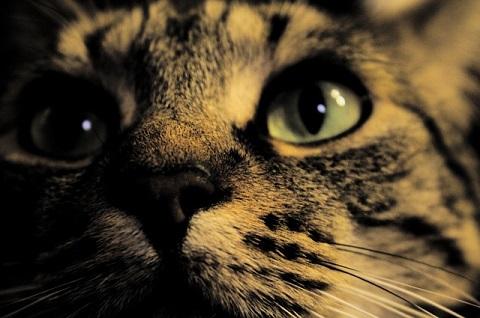 """夜の猫"""""""""""