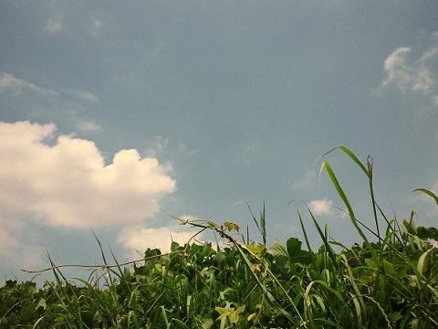 青空と雲、植物