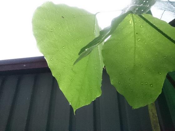 雨に濡れるベランダの植物