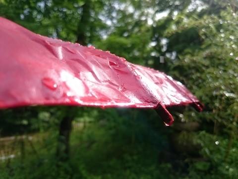 湯西川温泉 揚羽〜AGEHA〜(平家の庄) 雨上がりの庭