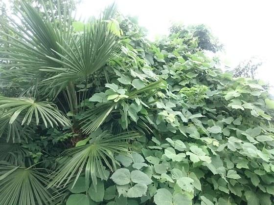 わが家の目の前にある植物
