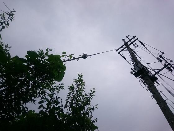 電柱を飲み込もうとする植物