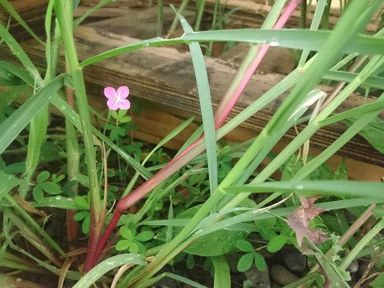 草むらの中の小さな花