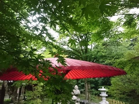 赤の野点傘
