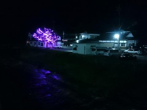 ライトアップされている木