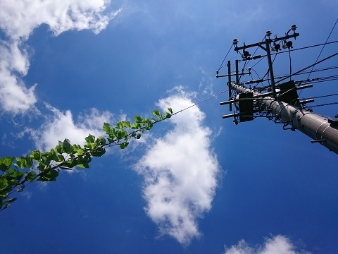 わが家の電柱と植物