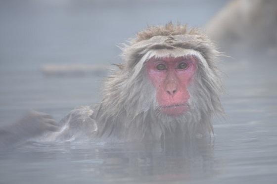 露天風呂でのんびり