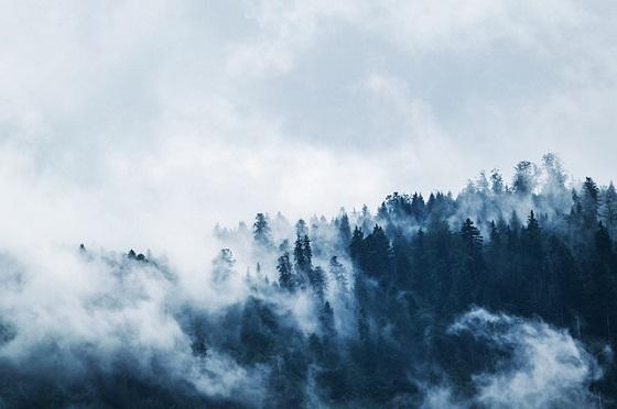 夢の中の森