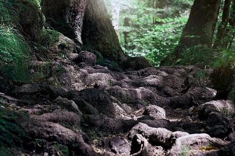 森の中を必死に逃げる