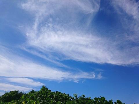 すじ雲-巻雲