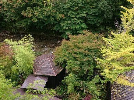 イチョウの木と貸切露天風呂、湯西川