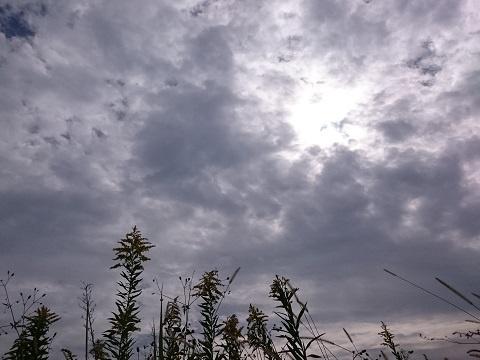 秋の草花とくもり空