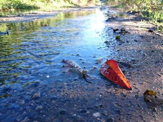 水たまりと赤い落ち葉