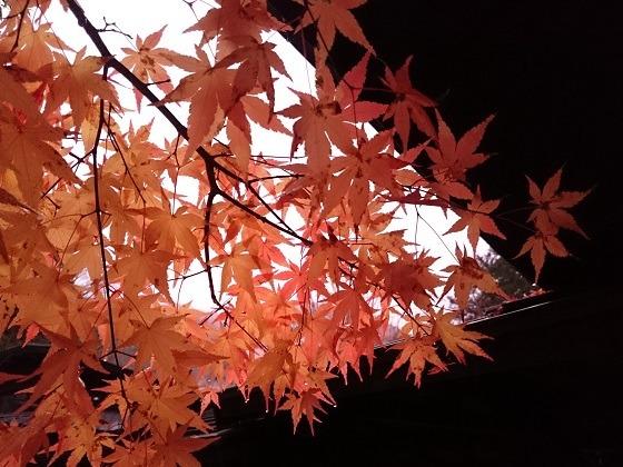 湯西川温泉 揚羽〜AGEHA〜(平家の庄)の紅葉