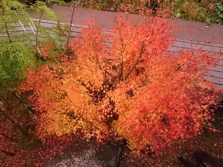 真上から見る紅葉