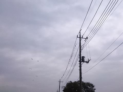 電線にとまる小鳥たち