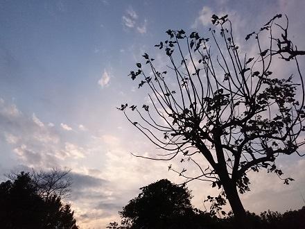 11月中旬の「気になる木」