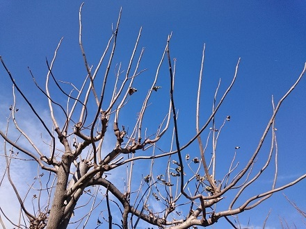 岡本太郎の木「芸術は爆発だ!」