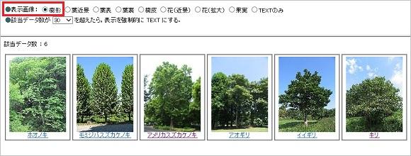 画像:樹形
