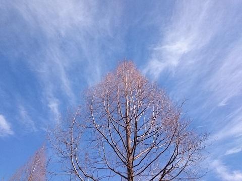 散歩道で見上げた空と木