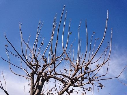 岡本太郎の木(桐)