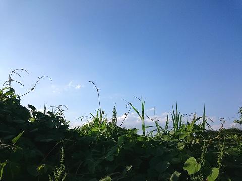 青空と伸びた草