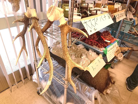 鹿のツノと大スズメバチ酒 水の郷湯西川