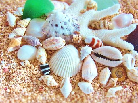 貝がらとシーグラス