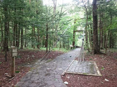 木々の奥に見える天楽堂つり橋