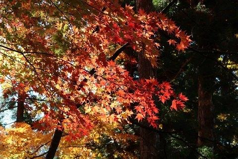 栗山森林公園の紅葉(湯西川温泉)