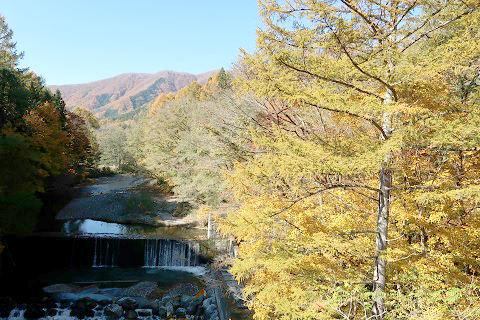 天楽堂つり橋の上流(秋)