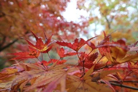 f湯西川温泉の紅葉