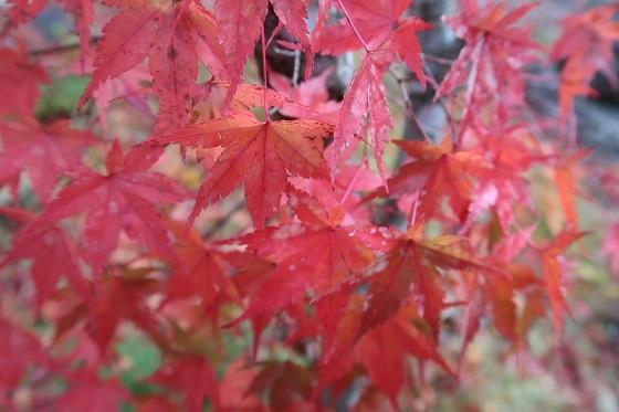 G7X MarkIIで撮影した紅葉
