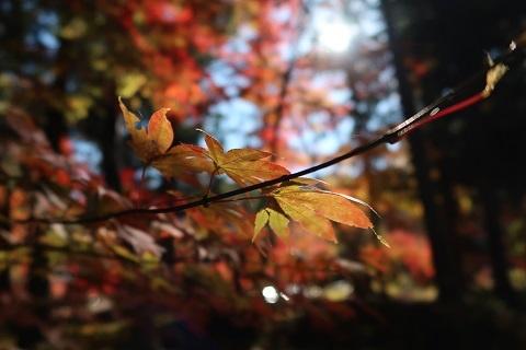 カメラ初心者がPowerShot G7X Mark2で撮影した紅葉