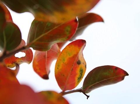 PowerShot G7X Mark2で撮影した紅葉