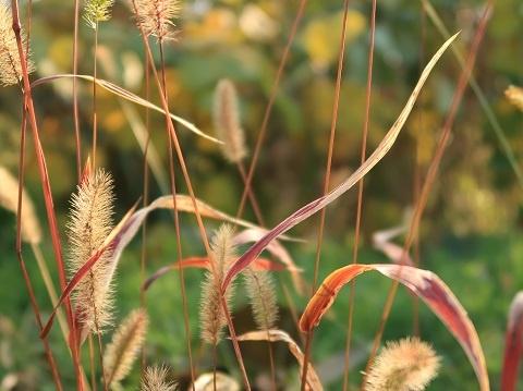 PowerShot G7X Mark2の日陰モードで撮影した野草