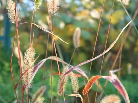 PowerShot G7X Mark2の太陽光モードで撮影した野草