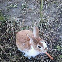 倉庫に現れたウサギ