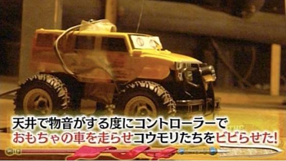 もしマイホームをコウモリに乗っ取られたら?自力でできた驚きの撃退法|THE突破ファイル|日本テレビ